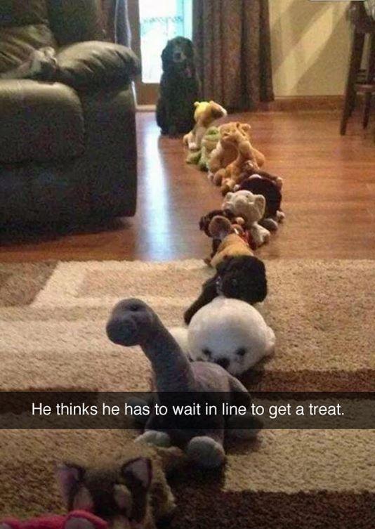 Treat Line
