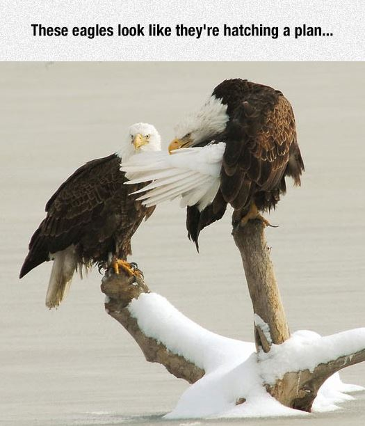 Eagles Plan