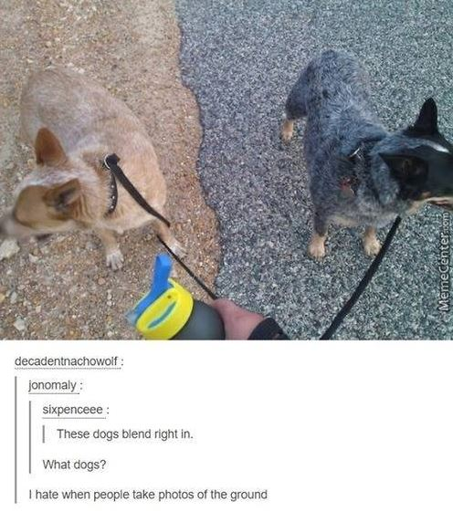 Camouflage Dogs