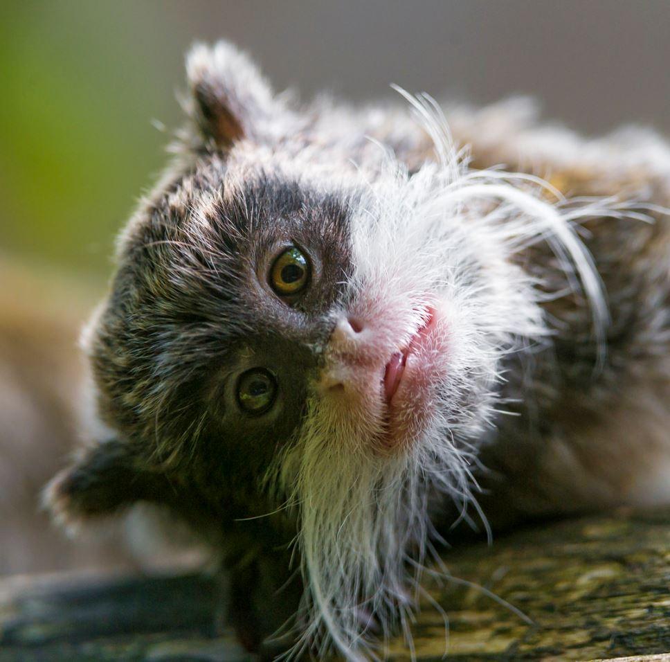 34 Super Cute Animals - Funoramic
