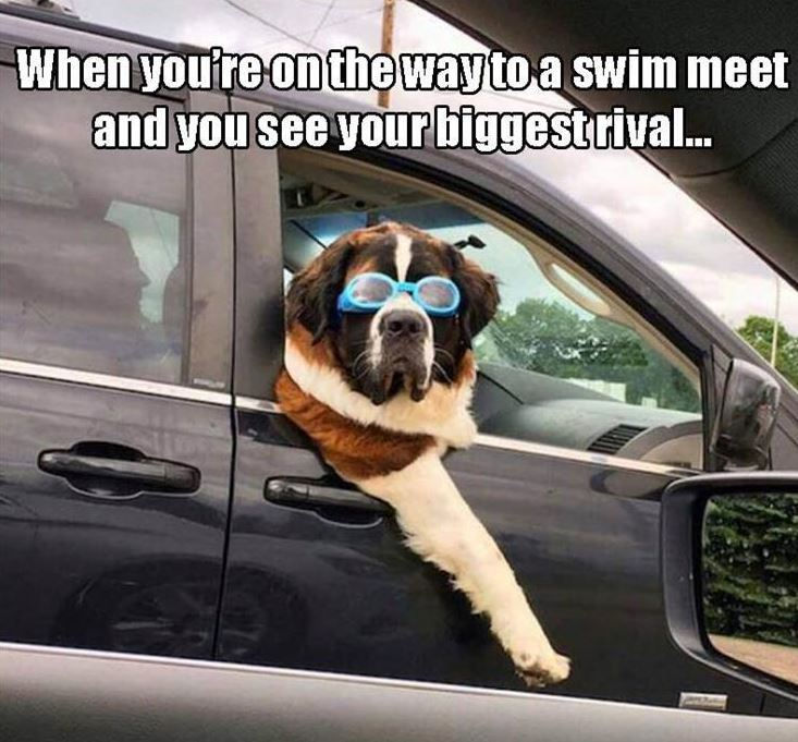 Funny Animals of The Day