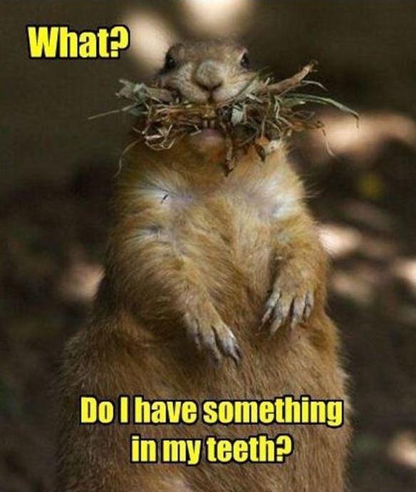 40 Funny Animal Memes