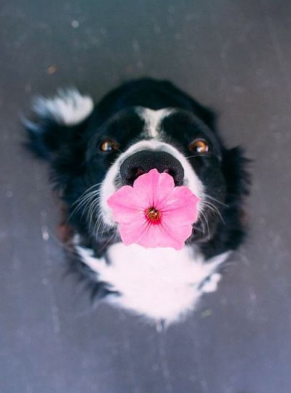 22 Amazingly Cute Animals That Will Melt Your Heart