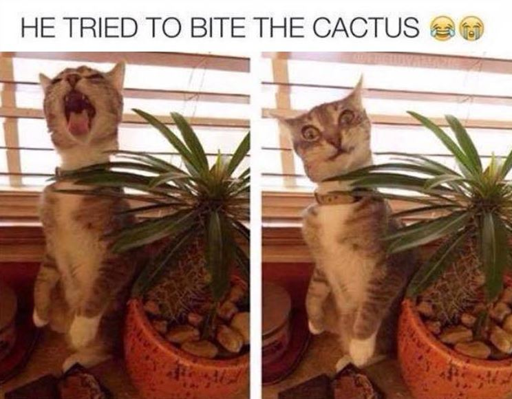Funny Pictures of The Day - 29 Pics