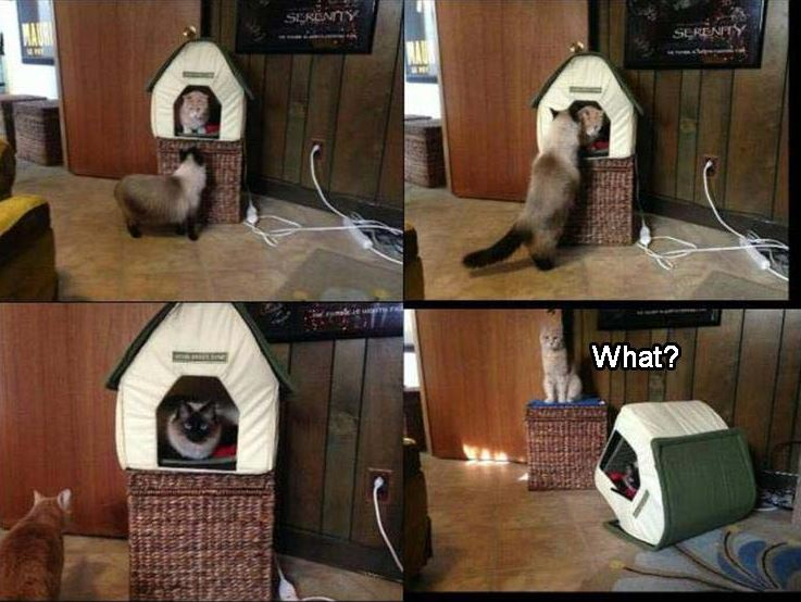 Funny Animal Pictures of The Day - 39 Pics