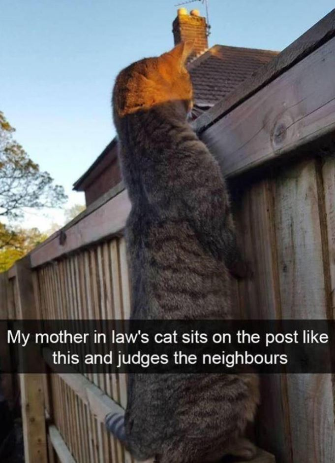 Funny Animals of The Day - 24 Pics