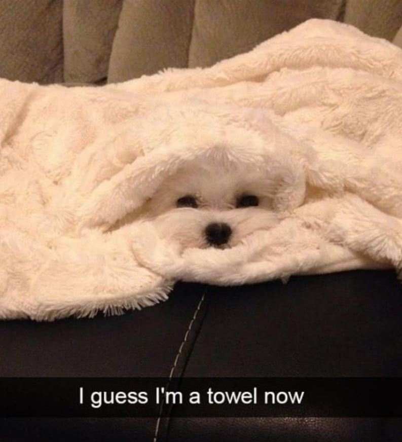 41 Funny Animal Pictures Of The Day - Funoramic